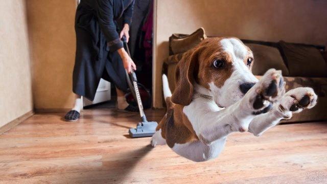 Собака убегает от пылесоса