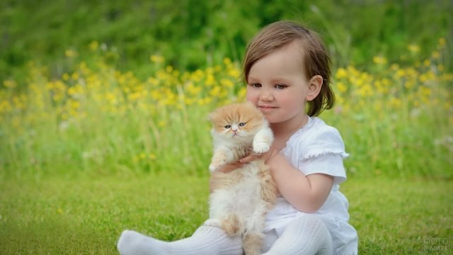 Девочка с бело-рыжим пушистым котёнком