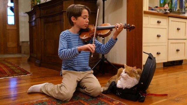 Мальчик на скрипке играет коту