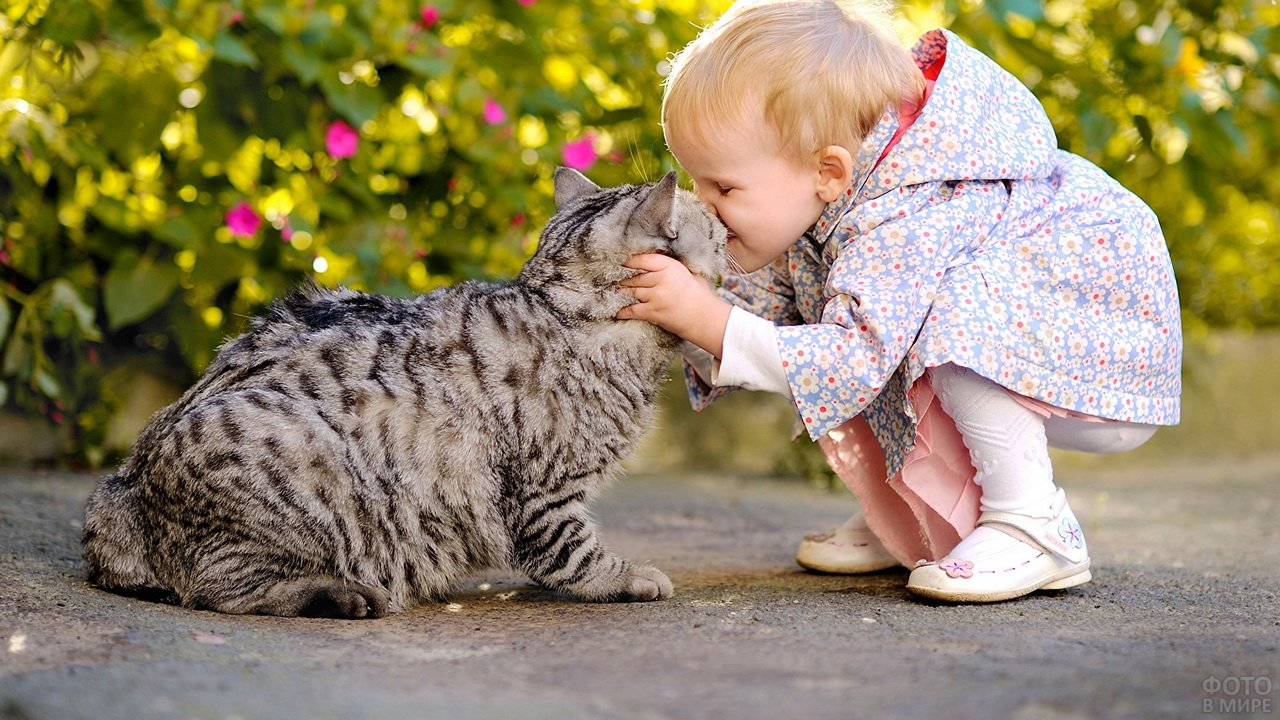 Ребёнок целует серую кошку