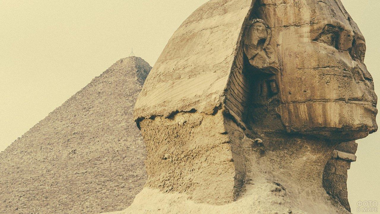 Крупный план сфинкса на фоне пирамиды