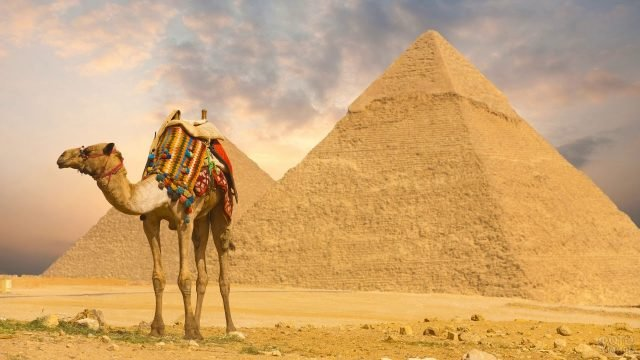 Верблюд и пирамиды - два символа Египта