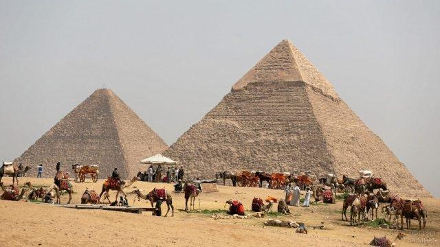 Верблюды и лошади для извоза туристов у пирамид
