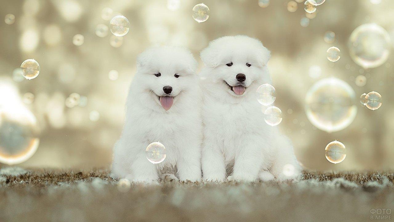 Два щеночка рассматривают мыльные пузыри