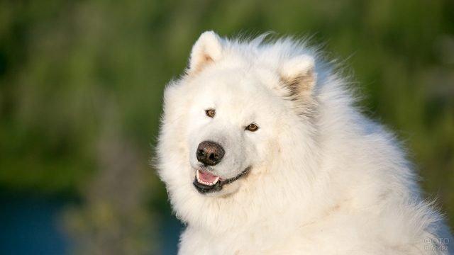 Красивая собачка на природе