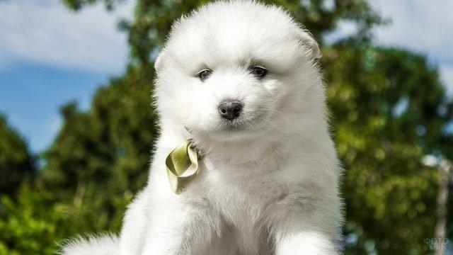 Милый пёсик с золотым бантиком