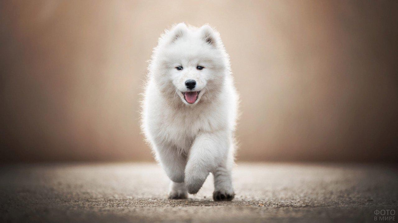 Пёс куда-то радостно спешит