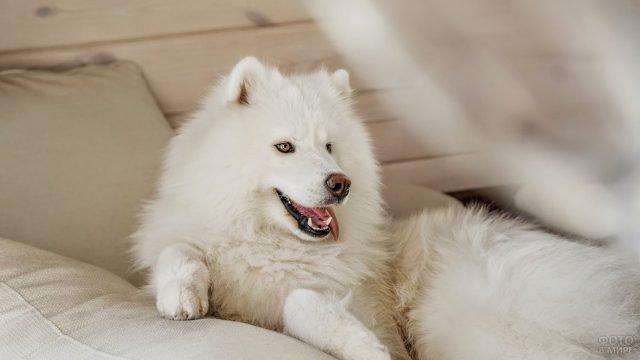Пёс отдыхает на диване