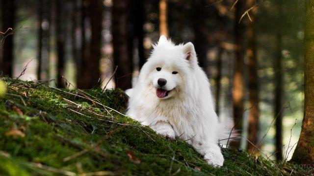 Пёс позирует в лесу