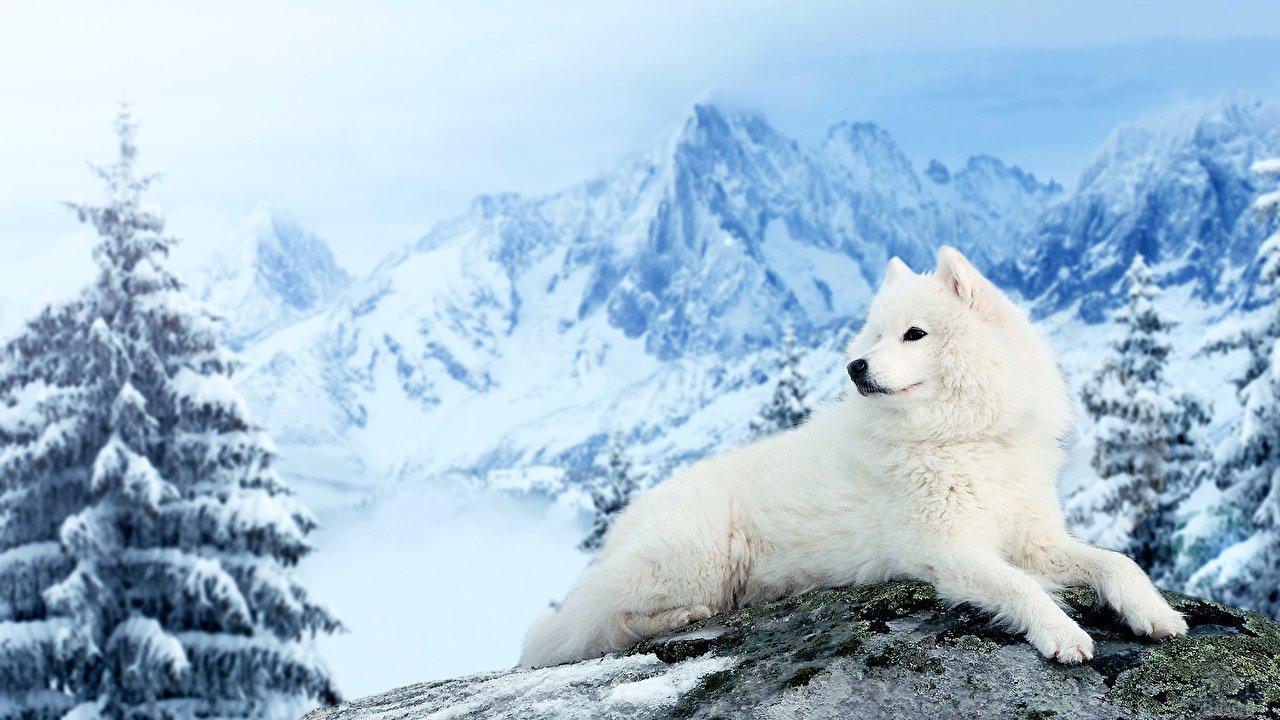 Пёс в заснеженных горах
