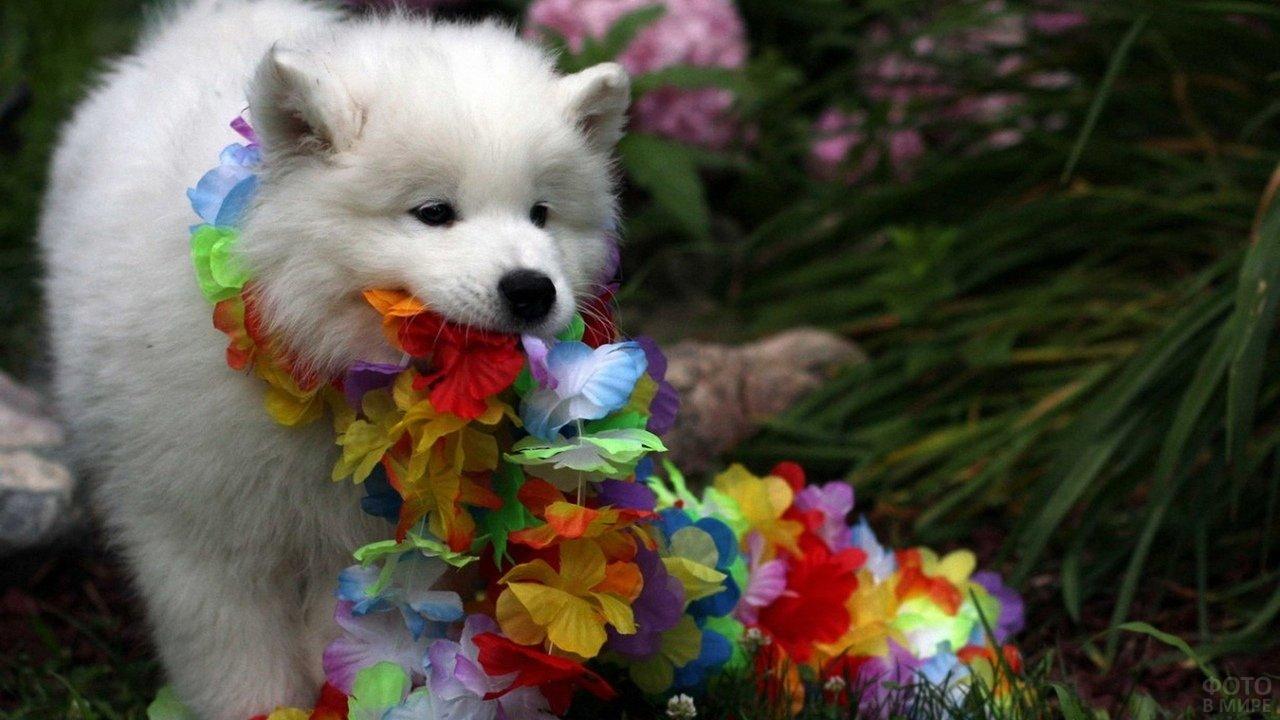 Пёсик играет с цветочной гирляндой