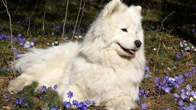 Псина отдыхает на цветочной поляне
