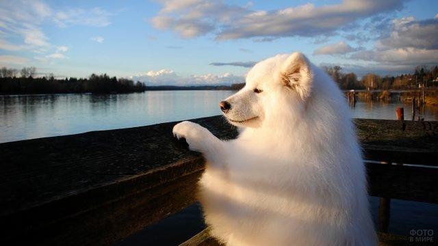 Самоед любуется живописным пейзажем