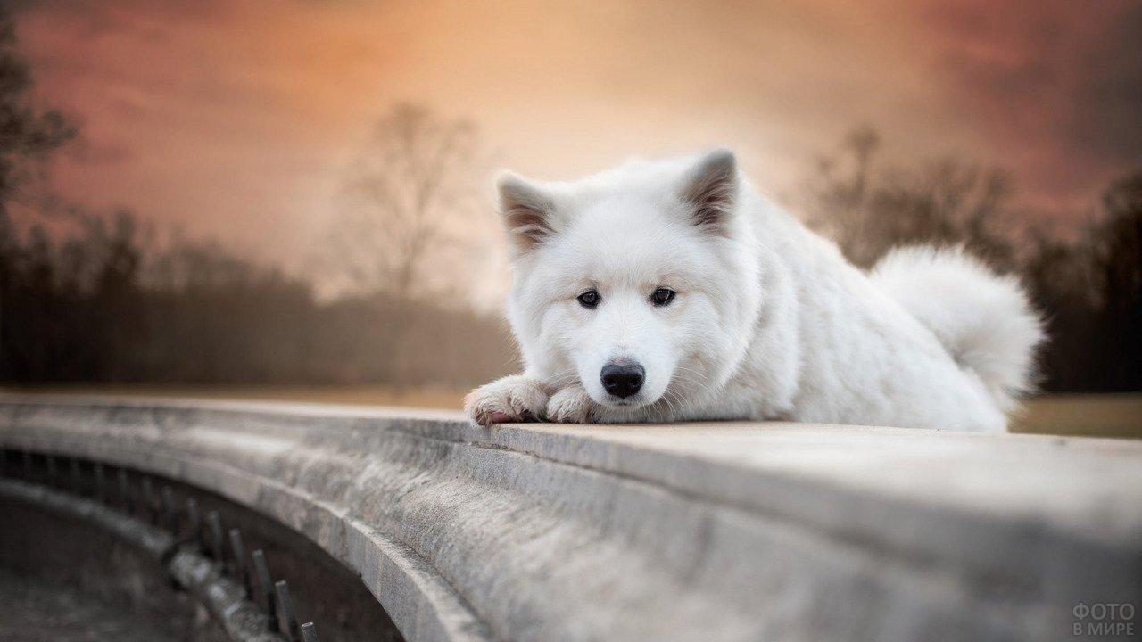 Собачка вдумчиво смотрит на камеру