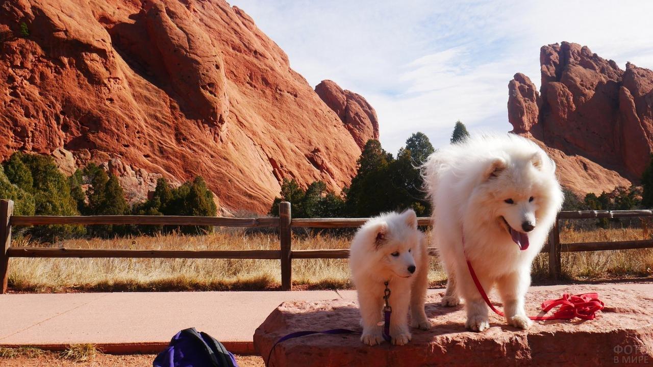 Собачки на прогулке в горах