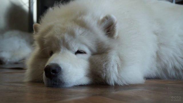 Собака дремлет на полу