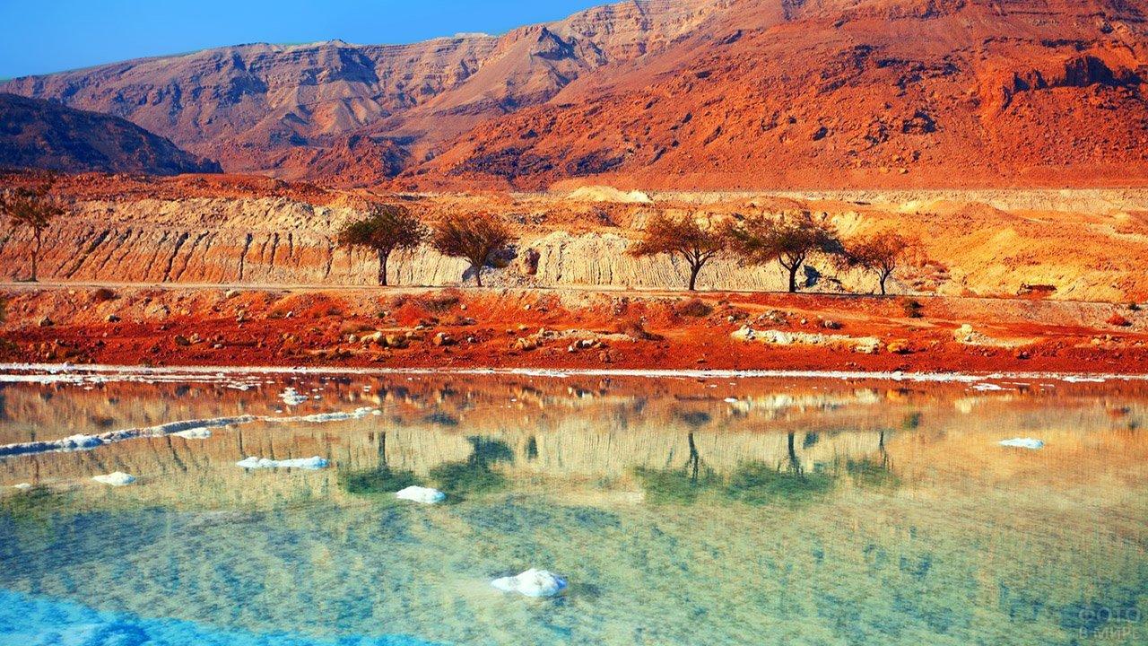 Живописный пейзаж дикой природы на побережье Мёртвого моря