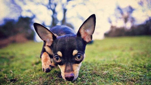 Собачка нюхает землю в поисках чего-то