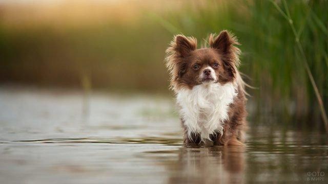 Собачка решила искупаться и залезла в воду