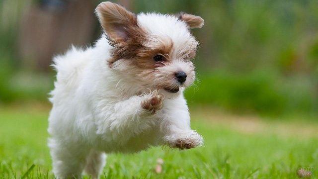 Собачка весело прыгает по травке