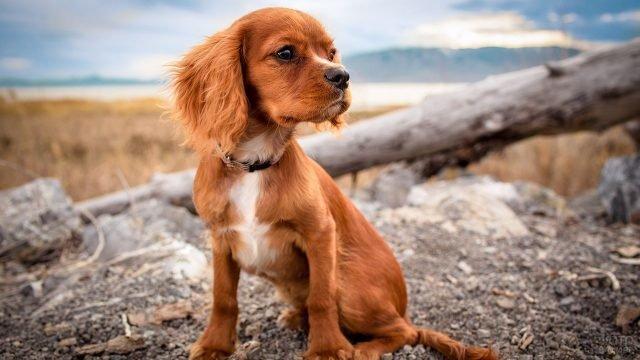 Собака на природе сидит и смотрит в сторону
