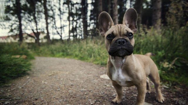 Собака стоит у тропинки