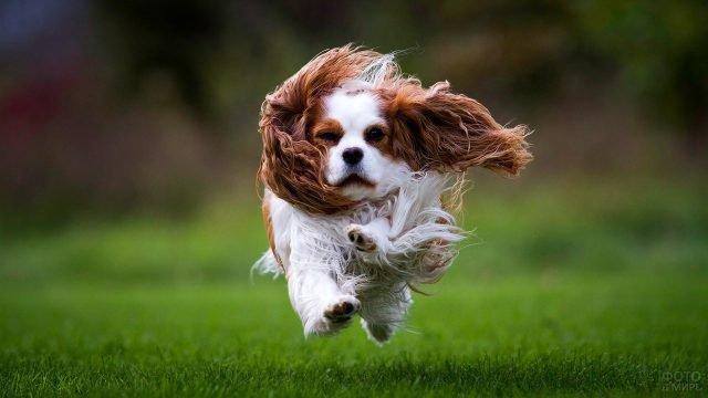 Собака в прыжке пытается справиться с ветром
