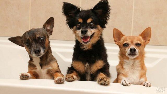 Три собачки выглядывают из ванной