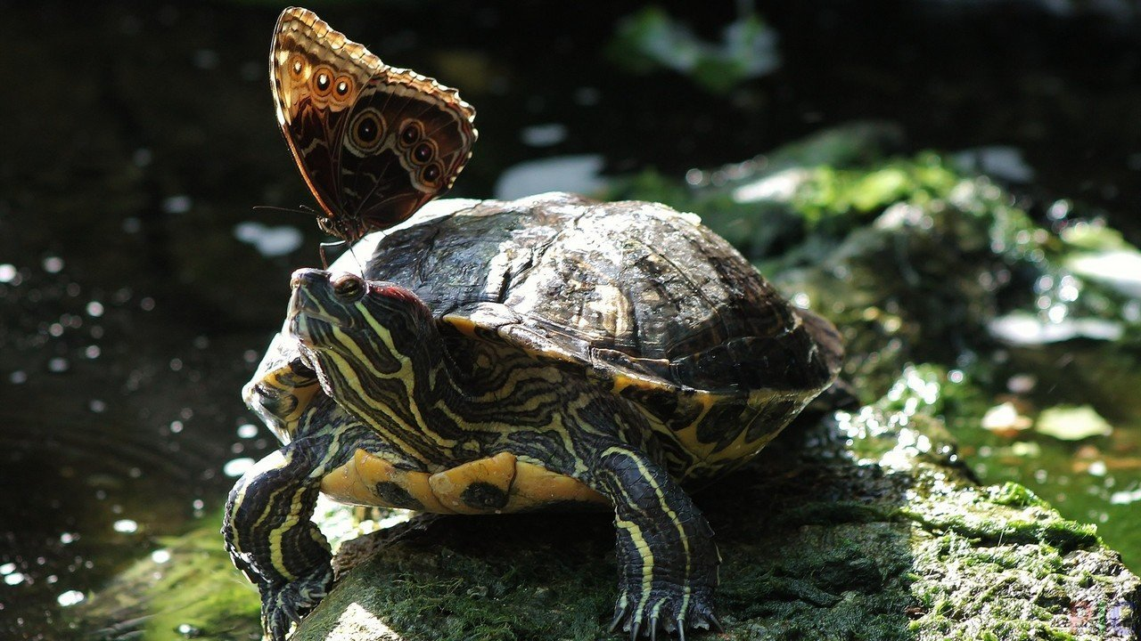 Фото с черепахами на рабочий стол