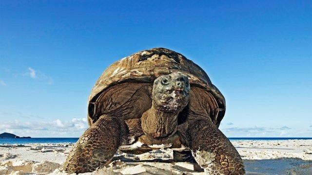 Древняя черепашка на берегу голубого океана
