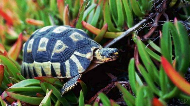 Маленький черепашонок ползёт по листве