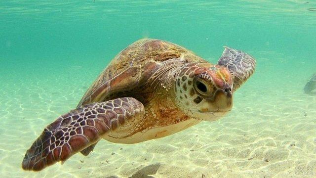 Малютка черепашонок проплывает на дне океана