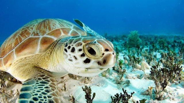Морда черепахи крупным планом на фоне коралловых рифов