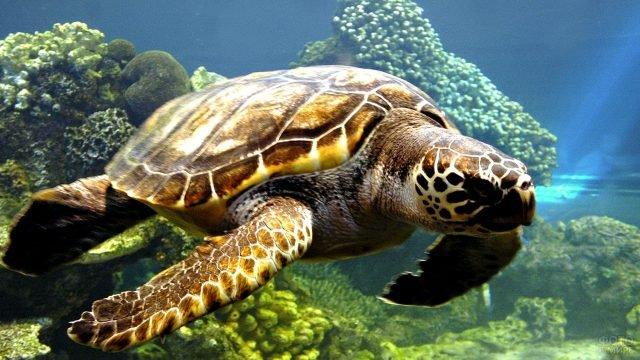 Невероятно красивый подводный мир