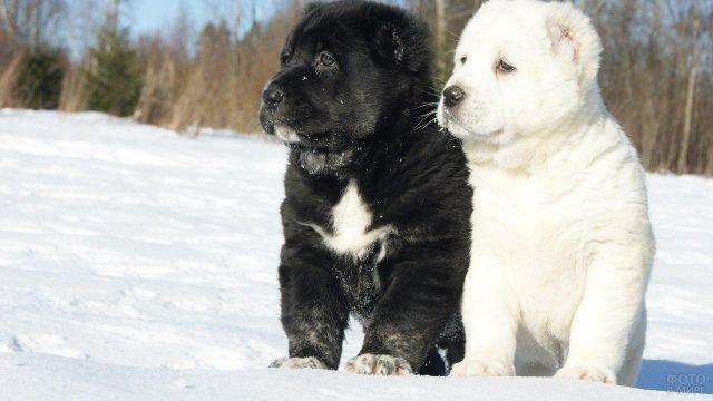 Два милых щенка сидят на снегу