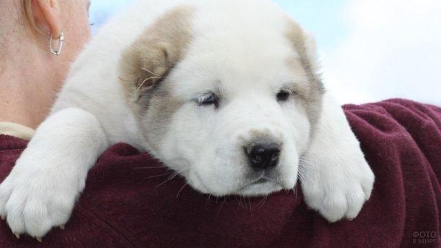 Милый щенок на плече у своей хозяйки