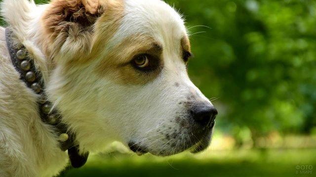 Пёс на природе пристально куда-то смотрит