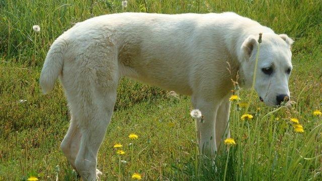 Собака на прогулке нюхает цветы