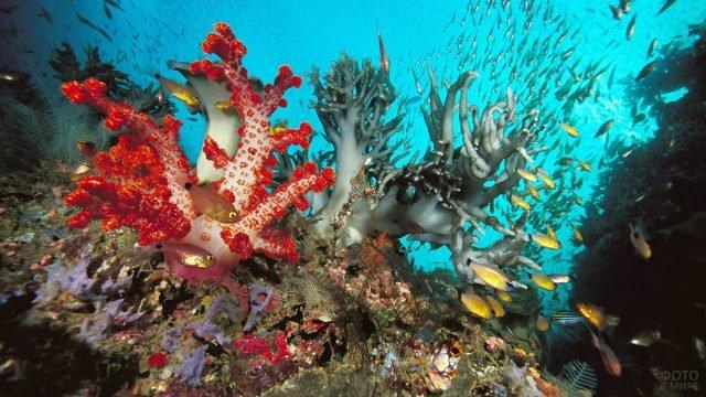 Подводный мир у берегов острова Иерро