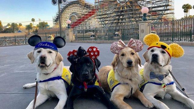 Собаки-поводыри в мультяшных ушках на фоне аттракционов в Диснейленде