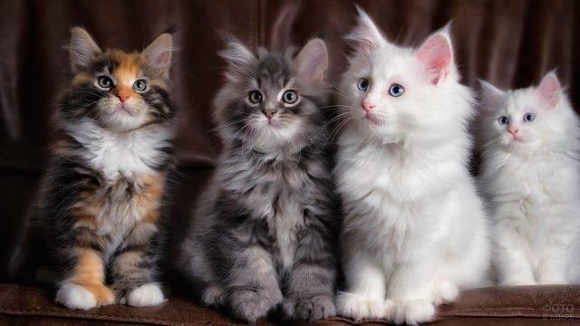 Четыре разноцветных котёнка