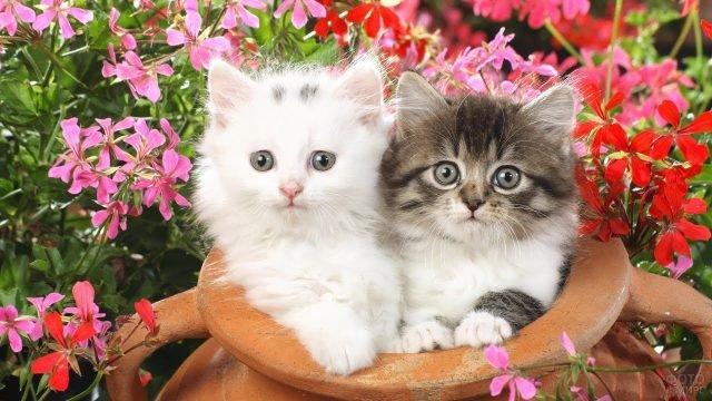Два котёнка сидят в горшке на фоне цветов