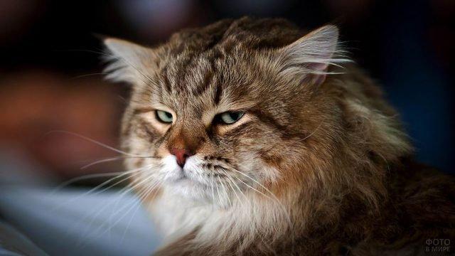 Хмурый рыжий кот