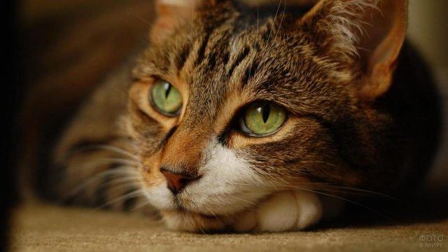 Котик отдыхает подложив лапки под голову