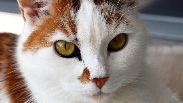 Рыжий котик с глубоким взглядом