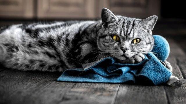 Серая кисуля лежит на полу обняв плед лапками