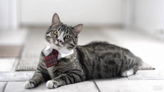 Симпатяга кот в галстучке