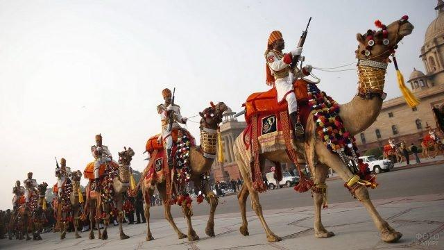 Боевые верблюды с вооружёнными солдатами в Индии