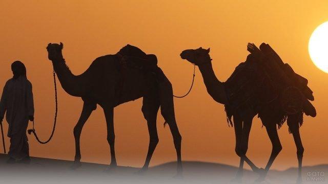 Человек и два верблюда на закате