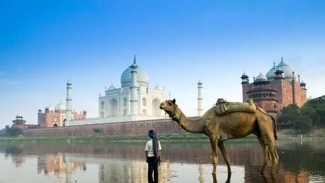 Человек с верблюдом на фоне мечети в Индии